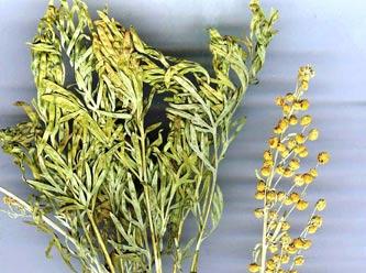 Artemisia L. Bitkisinin yararları
