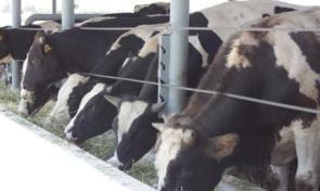 Birçok Besi Çiftliği Satılıyor