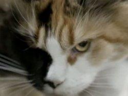 Brezilya'da Cezaevine Üzerinde Malzemeyle Giren Kedi Yakalandı