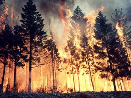 Çanakkaledeki Ormanı Göktaşı Mı Yaktı?