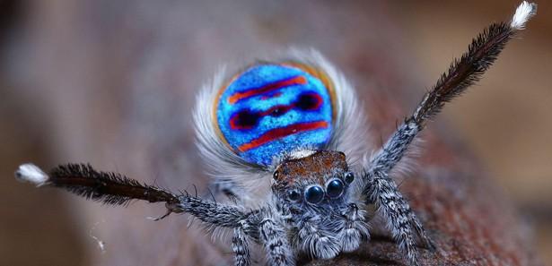Dans Eden Örümcek Keşfedildi / VİDEO