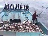 Denizden Çok İlginç Balık Tutma Şekilleri