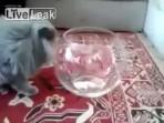 Fanusun İçine Sıkışan Kedi