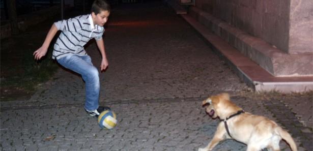 Futbolcu Köpek Görüntüleri İzle