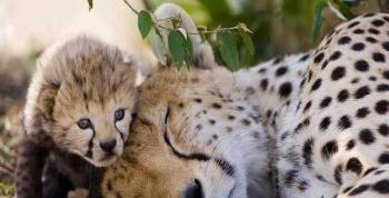 Hayvanların En Sevimli Halleri