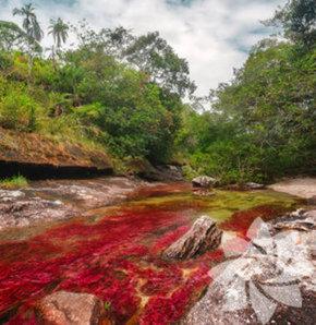 Hiç Rengârenk Nehir Gördünüz Mü?
