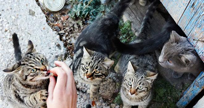 Kediler Sahibini Yedi