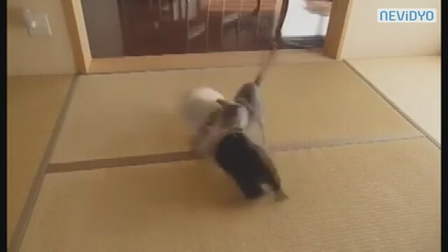 Kedinin Korkudan Aklı Çıktı