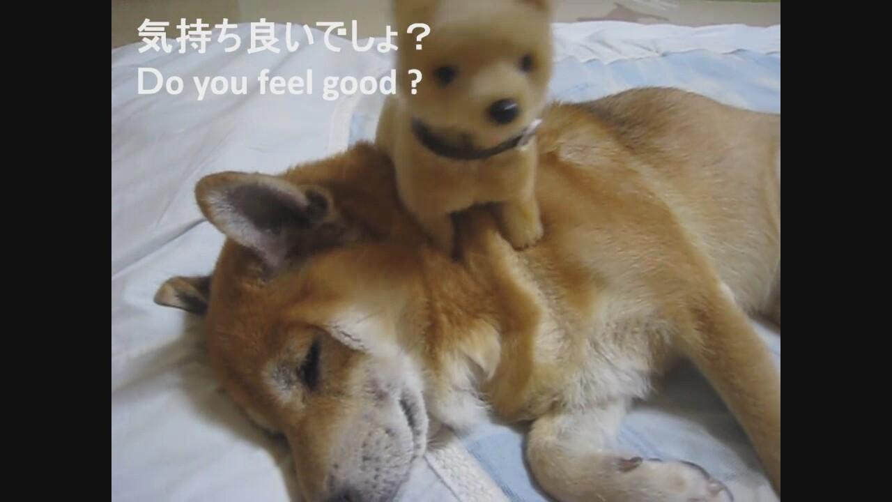 Köpeğin Masajcısı Oyuncak Köpek