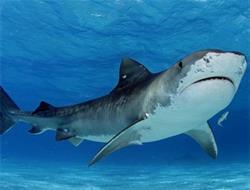 Köpekbalığı Saldırısı 1ölü