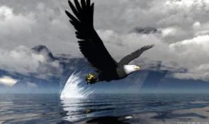 Kuşlar Süratlerini Biliyorlar