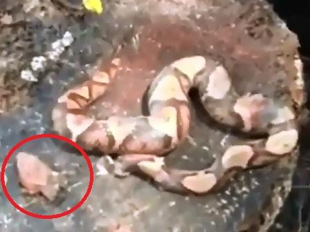 Öldükten Sonra Kendisini Zehirledi (Video)