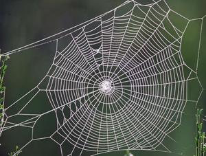 Örümcek Ağından Protez Geliştirildi