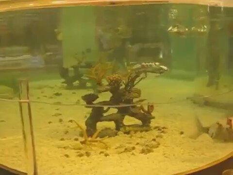 Robot Balıkları İzle
